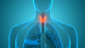 Animation of thyroid and parathyroid
