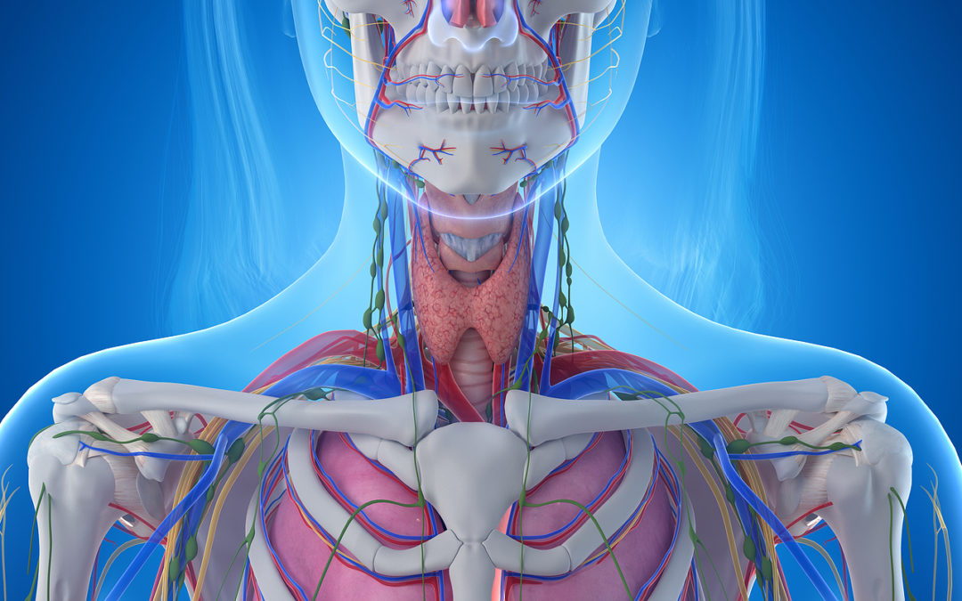 An In-Depth Look at the Anatomy of the Throat and Neck
